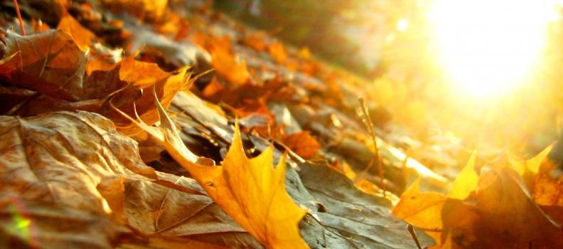Sole in Bilancia: arriva l'autunno
