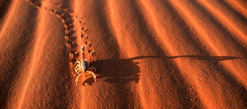 Il transito del Sole nello Scorpione